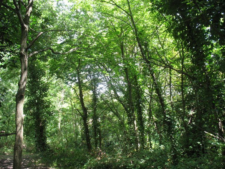 Dacres Wood
