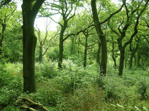 view of woodland Queens Wood
