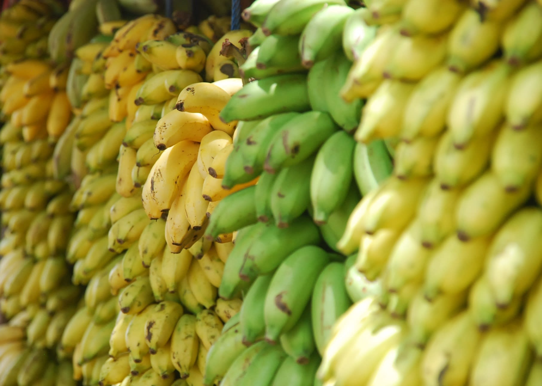 Lead Nurturing: Are You Serving Green Bananas?