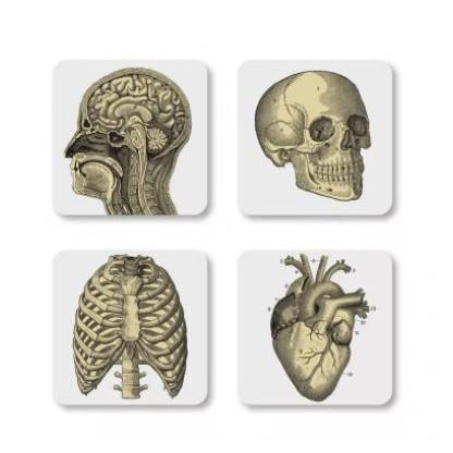 Cubic Biology Coasters