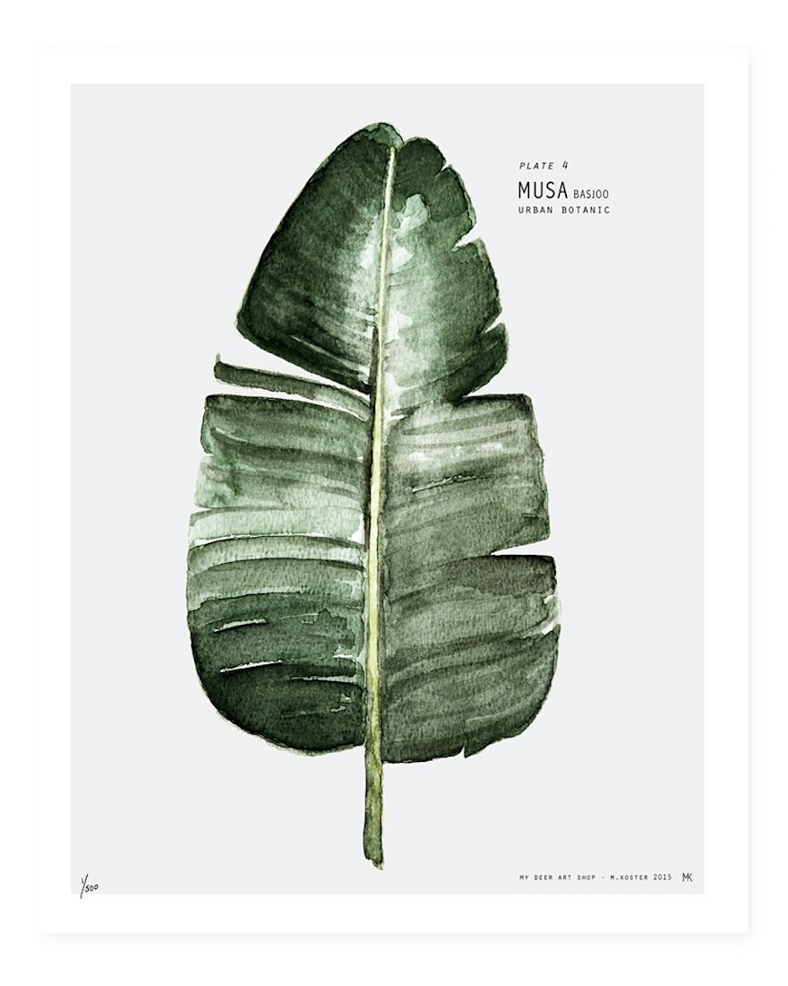 Botanic Urban Plate 4 - Musa  Medium