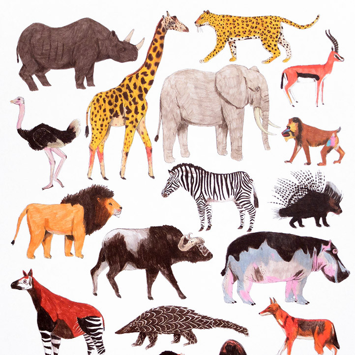 trouva cha com letras african animals print a4