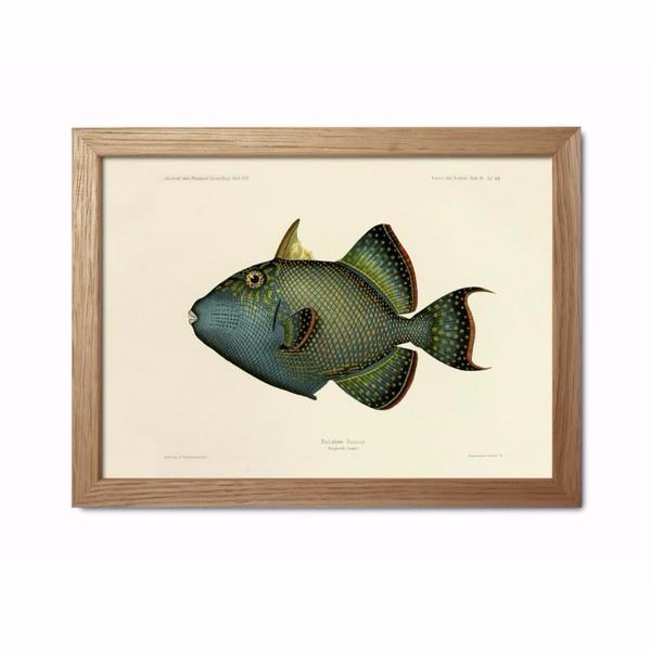 Dybdahl Blue Fish Framed