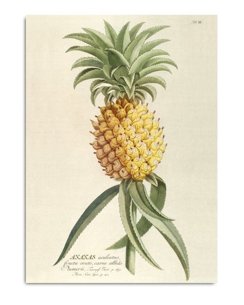70x100cm Pineapple Plant Print