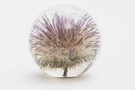 trouva thistle 8 5 cm paperweight