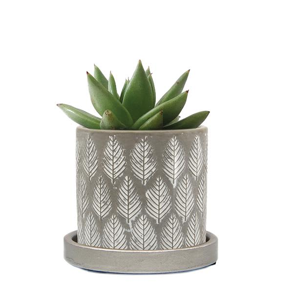 Chive Balter Plant Pot & Saucer With Grey Leaves