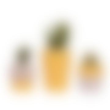 Set Of 3 Yellow Concrete Pots Mixed Cacti & Succulents