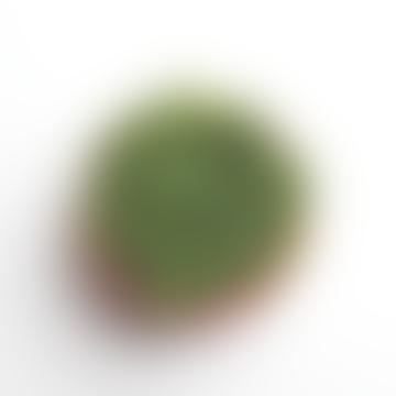 Green Dot Flower Pot