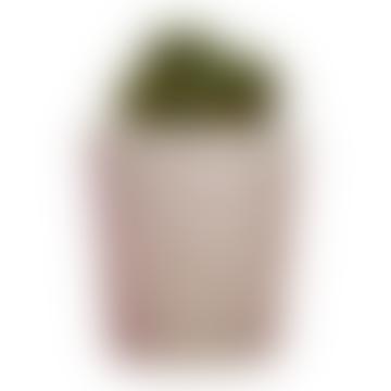 Small Concrete Pot With Cactus Or Succulent
