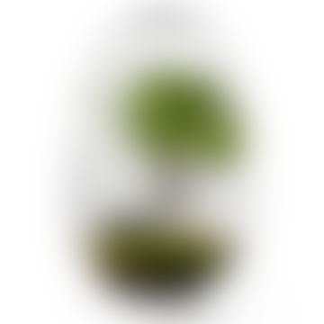 Design House Stockholm  Large Grow Greenhouse 32 cm
