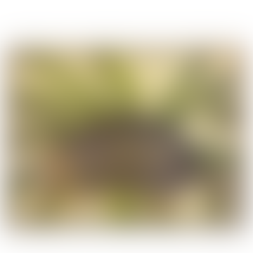 Framed Art Framed Armadillo Print (30x40)