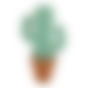 Big Green Stripes Cactus Decor