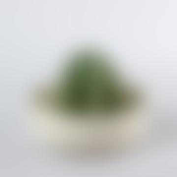DOIY Design White Ceramic Sonora Cactus Juicer