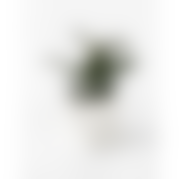 House Raccoon Large White Marble Jesmonite Planter Mare