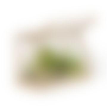 Ash Mini Greenhouse (2 colours)