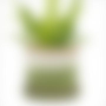 Pot et soucoupe Minute en céramique émaillée Green Layers