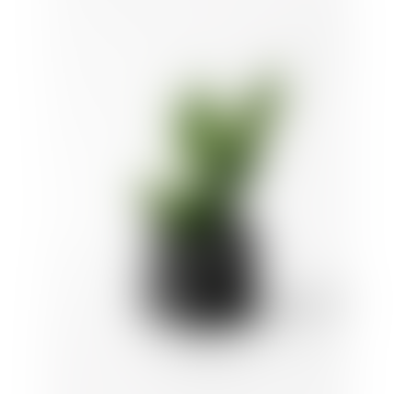 House Raccoon Medium Black Marble Jesmonite Planter Mare