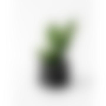 House Raccoon Large Black Marble Jesmonite Planter Mare