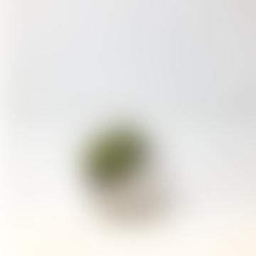 White Mini Succulent Planter