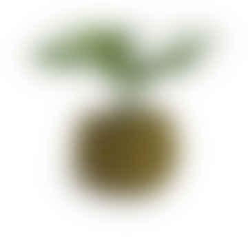 Large Round Flower Pot