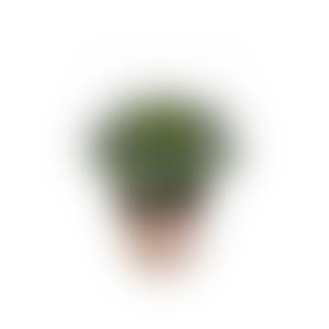 Dröm Collection Artificial cactus with earthenware flowerpot 18xh24cm