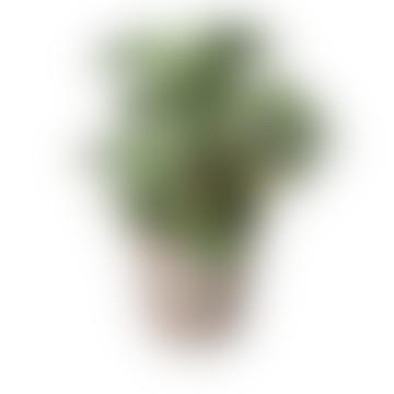 Assorted Faux Cactus Arrangement