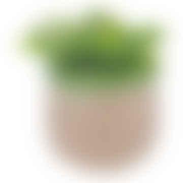Terracotta Pot Rustico Verde