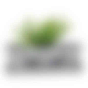 Casa Verde Zinc Tray with 3 Pots