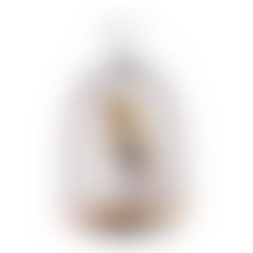 Jingoo Bluetooth Haut-Parleur & Lampe