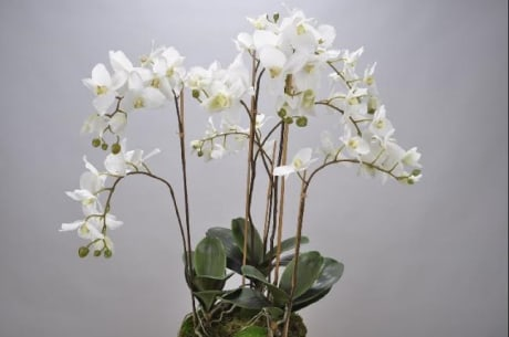 Trouva Large White Silk Orchid Display Silk Ka