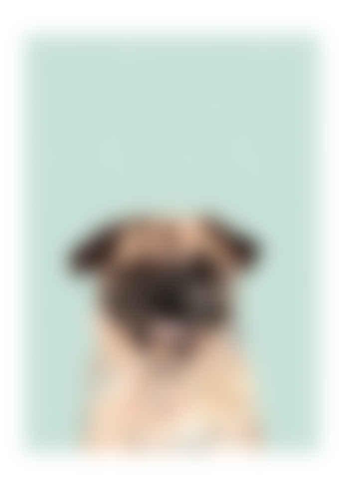 East End Prints  Pug Dog A3 Framed Print