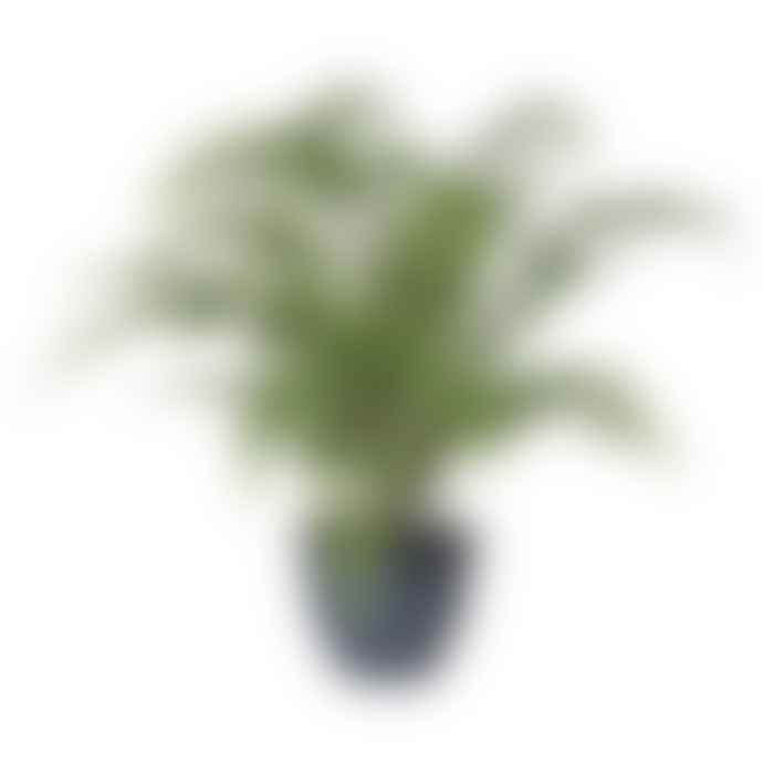 HAYGEN Medium Fern Plant In Dark Grey Pot