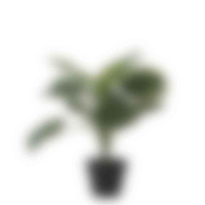 Bahne Faux Monstera Plant In Pot