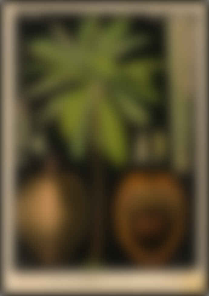 Cuemars Coconut Palm Vintage Illustration
