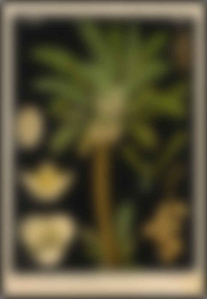 Cuemars Date Palm Tree Vintage Illustration