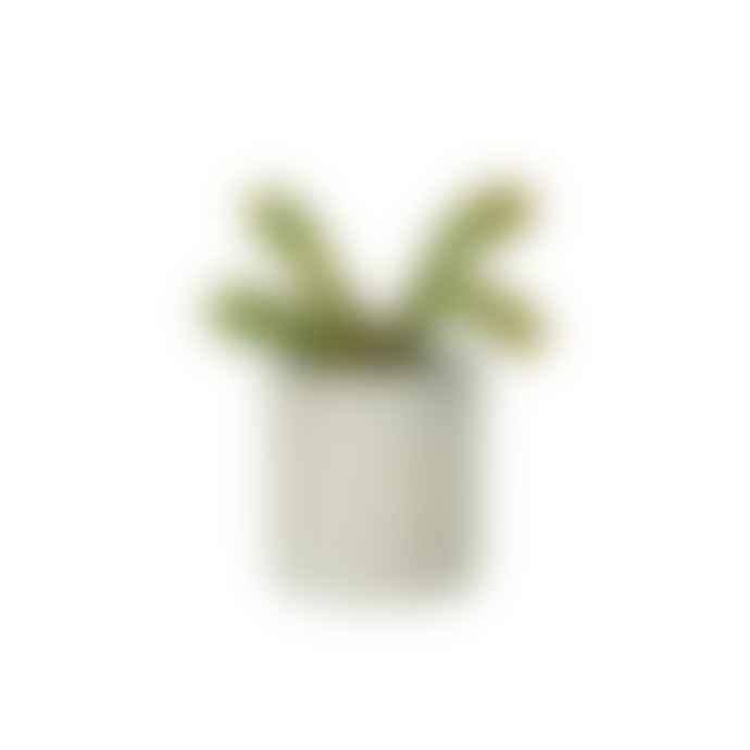 Conpot Small Planter