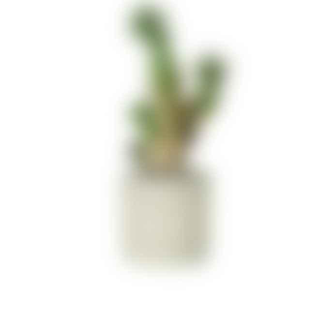 Conpot Medium Planter