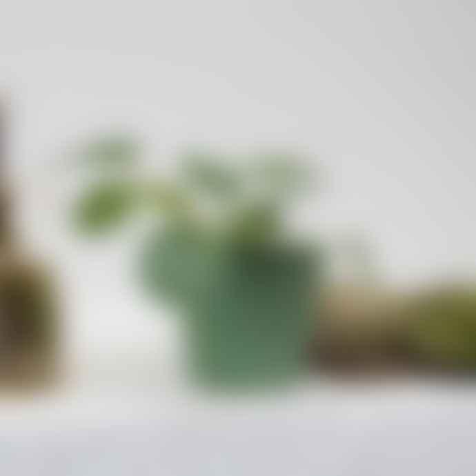 Botanique Workshop Baby Pilea Peperomioides Plant With Pot
