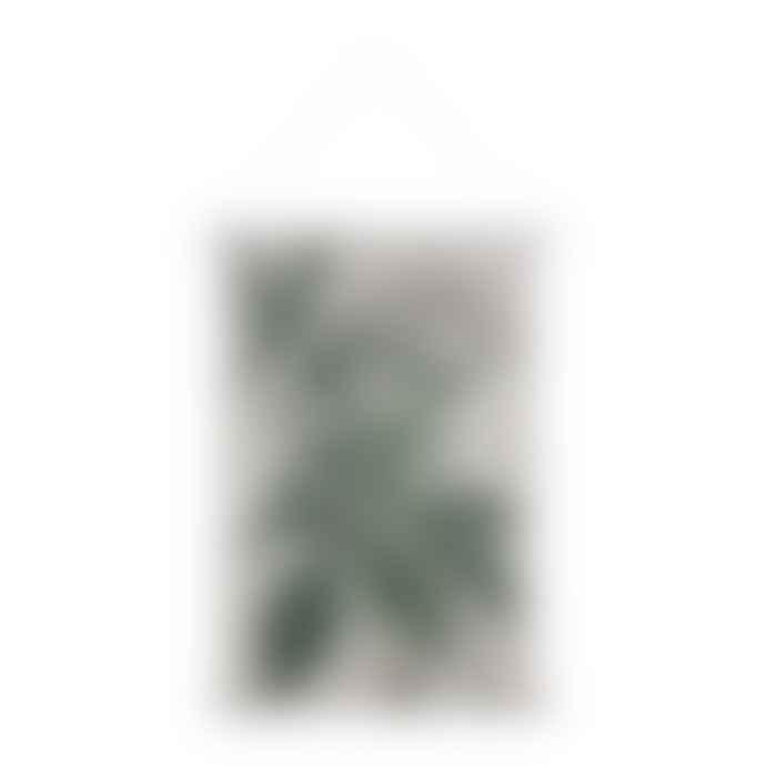 CollardManson Large Botanical Wall Chart