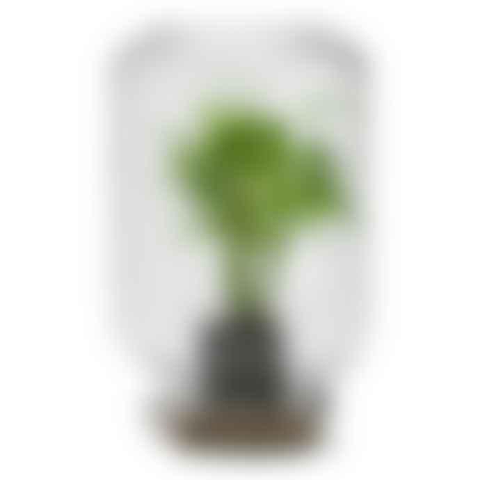 Pikaplant Jar Chamaedorea Palm Plant