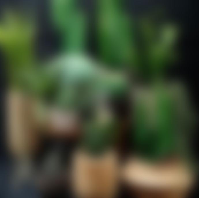 Parlane Faux Potted Aloe Plant