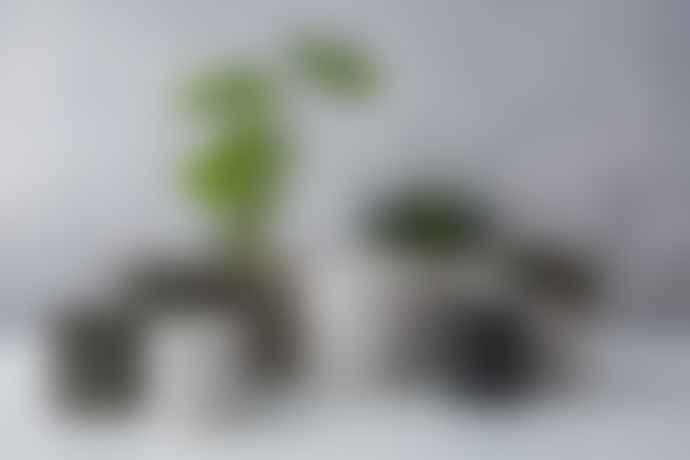 Conpot Green Small Granite & Concrete Pot