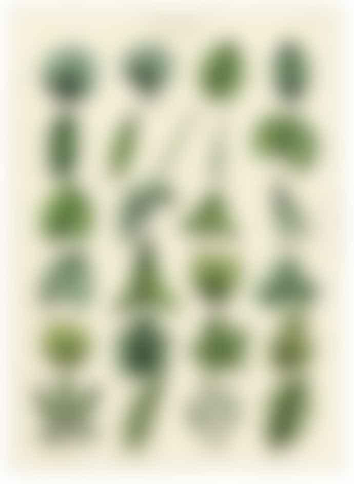 Cavallini & Co Botany Leaves Poster