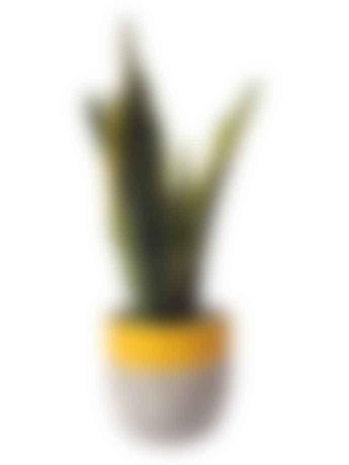 Hi Cacti Medium Yellow Concrete Plant Pot