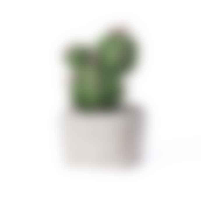 Abigail Ahern Brasilia Mini Cactus