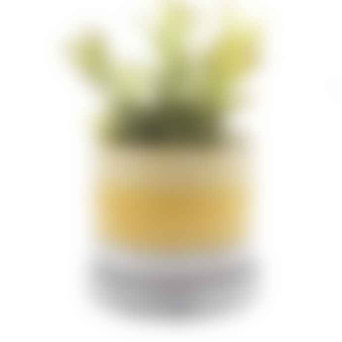 Home & Garden Chive Minute Boombastic Yellow Plant Pot And Saucer