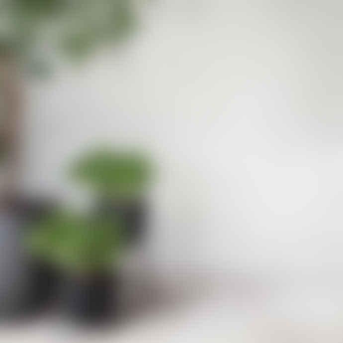 Menu Small Black Wire Stand & Plant Pot