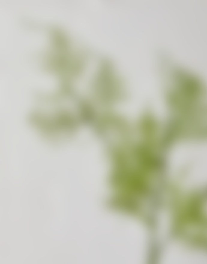 Abigail Ahern Asparagus Spray Realistic Faux Flower Stem