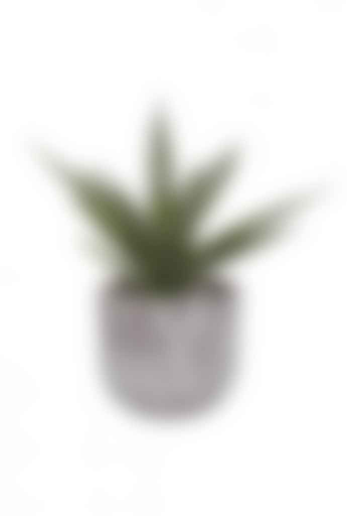 The Home Collection Green Speckled Aloe Vera In Square Cement Pot
