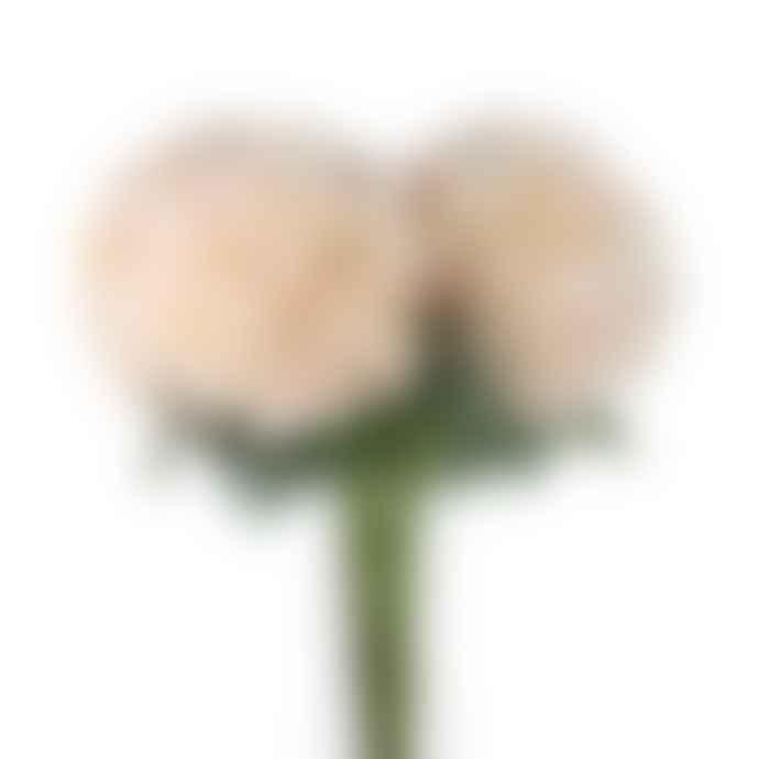 Homewood & Rose Autumn White Hydrangea